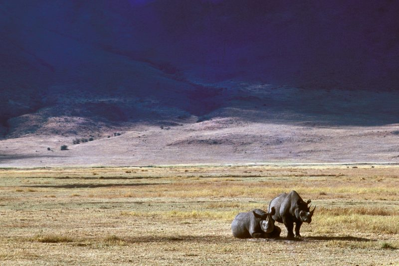 Dasgupta's Economics Can't Fix the Extinction Crisis.